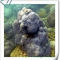 Corallove.jpg