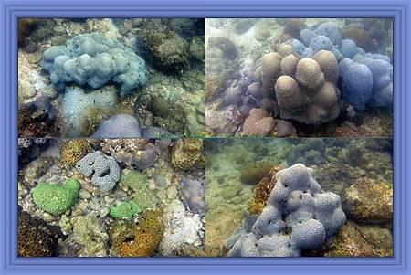 HK Coral Garden.jpg