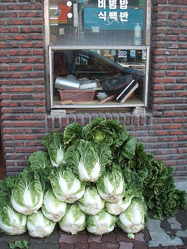 大白菜,每天就送到店家門口
