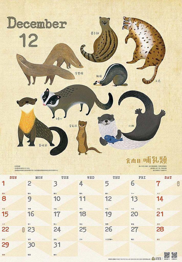 12月份收錄了食肉類哺乳類,如石虎、白鼻心、麝香貓。(照片提供/林務局)