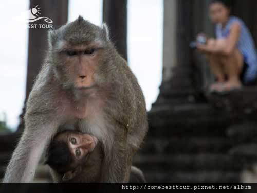 大猴帶小猴