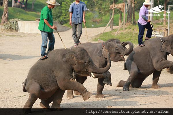泰國大象學校