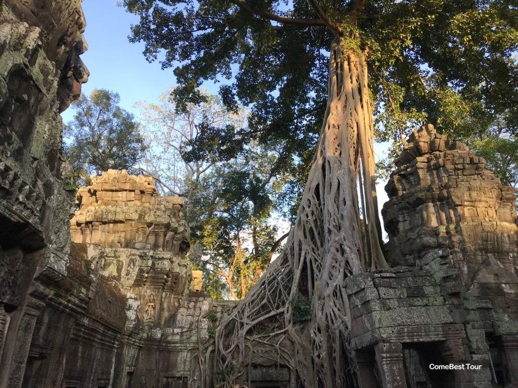 塔普倫寺百年老樹纏繞.jpg