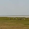 風吹草低見牛羊(不用草低也能見牛羊阿><)