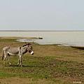 風吹草低見驢驢