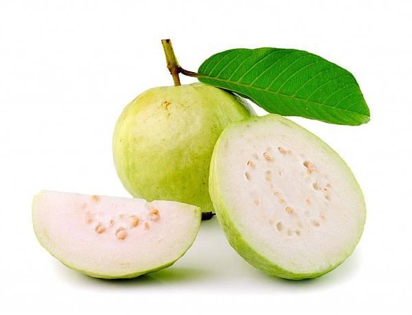 guava-leaf-1024x782