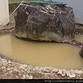 32.第一池生態池.jpg