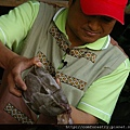 赤小豆鯉魚