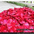 剛摘採下來的新鮮玫瑰花瓣