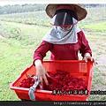 就算是可食用的玫瑰花還是要清洗喔!