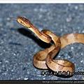 貪食蛇9P15