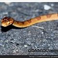 貪食蛇1P01