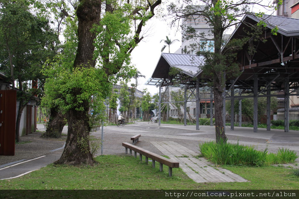 原來是有個小型的樟樹公園