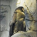 CX3-動物園-009.jpg