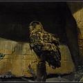 CX3-動物園-024.jpg