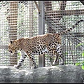 CX3-動物園-028.jpg
