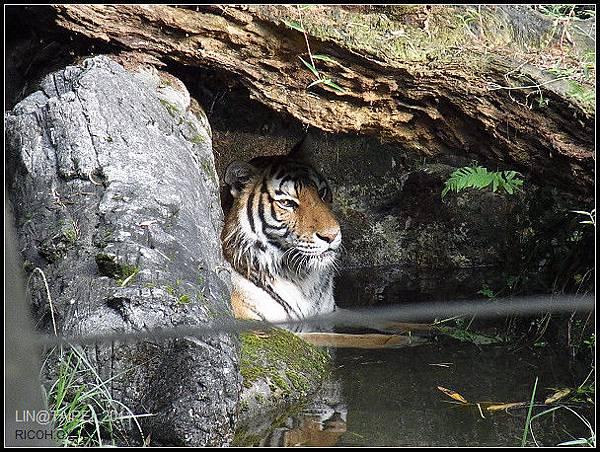 CX3-動物園-030.jpg
