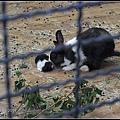 CX3-動物園-033.jpg