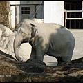 CX3-動物園-029.jpg