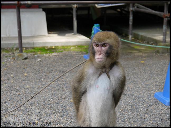 GF3-06-家族旅行inTokyo-淺草與小猴子-005.jpg