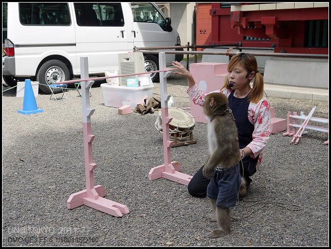 GF3-06-家族旅行inTokyo-淺草與小猴子-006.jpg