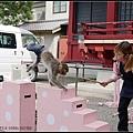 GF3-06-家族旅行inTokyo-淺草與小猴子-009.jpg