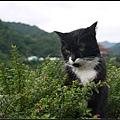 GF3-探訪猴硐貓之村-018.jpg