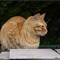 GF3-探訪猴硐貓之村-019.jpg