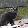 GF3-探訪猴硐貓之村-059.jpg