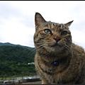 GF3-探訪猴硐貓之村-041.jpg