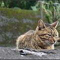 GF3-探訪猴硐貓之村-065.jpg