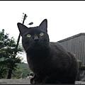 GF3-探訪猴硐貓之村-079.jpg