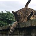 GF3-探訪猴硐貓之村-032.jpg