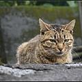GF3-探訪猴硐貓之村-066.jpg