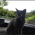 GF3-探訪猴硐貓之村-073.jpg