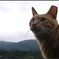 GF3-探訪猴硐貓之村-034.jpg