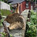 GF3-探訪猴硐貓之村-031.jpg