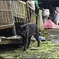 GF3-探訪猴硐貓之村-049.jpg