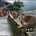 GF3-探訪猴硐貓之村-045.jpg