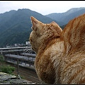 GF3-探訪猴硐貓之村-036.jpg