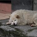 GF3-探訪猴硐貓之村-026.jpg
