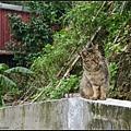 GF3-探訪猴硐貓之村-028.jpg