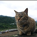 GF3-探訪猴硐貓之村-038.jpg