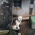 GF3-探訪猴硐貓之村-048.jpg