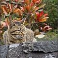 GF3-探訪猴硐貓之村-061.jpg