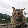 GF3-探訪猴硐貓之村-039.jpg