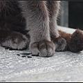 GF3-探訪猴硐貓之村-074.jpg
