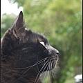 GF3-探訪猴硐貓之村-076.jpg