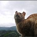 GF3-探訪猴硐貓之村-035.jpg
