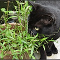 GF3-探訪猴硐貓之村-058.jpg